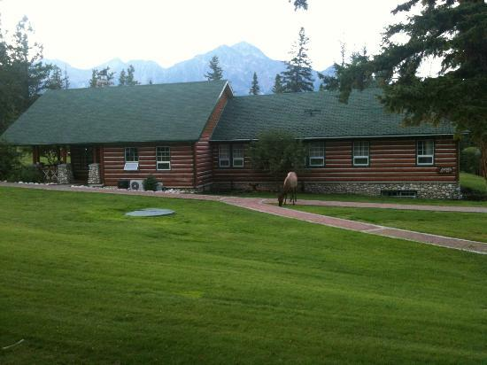 Fairmont Jasper Park Lodge: elks