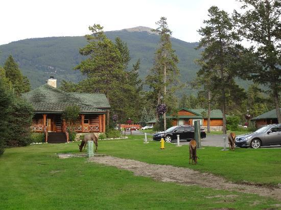 Fairmont Jasper Park Lodge: lodges