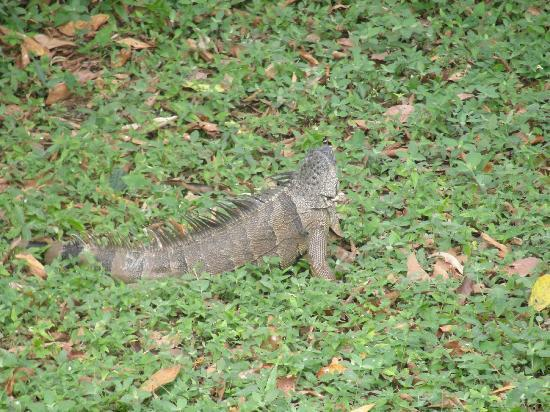 Cotton Tree Lodge: Our guest that visited almost daily