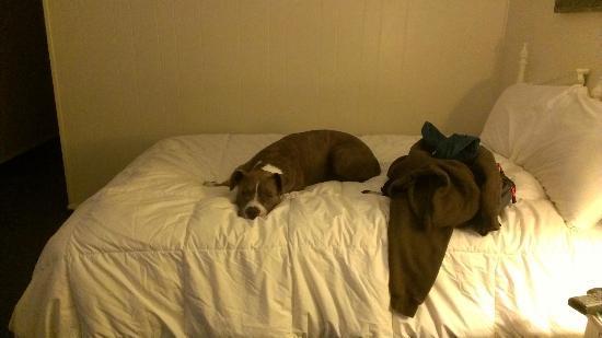 سينيك إن أوف كونواي: Troy enjoying his own bed 