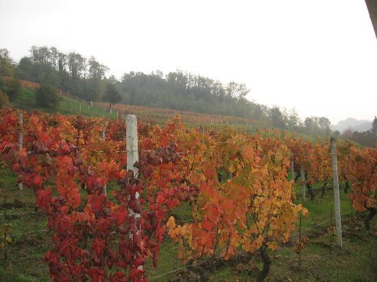 Agriturismo Cascina Tollu: Autumn Vineyards