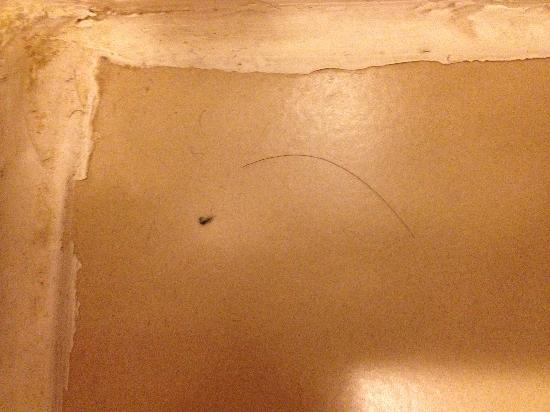 Days Inn Philadelphia Convention Center: hairs on bathroom floor