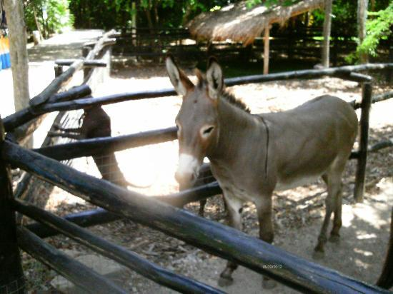 Sandos Caracol Eco Resort: donkeys
