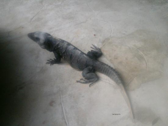 Sandos Caracol Eco Resort: wildlife