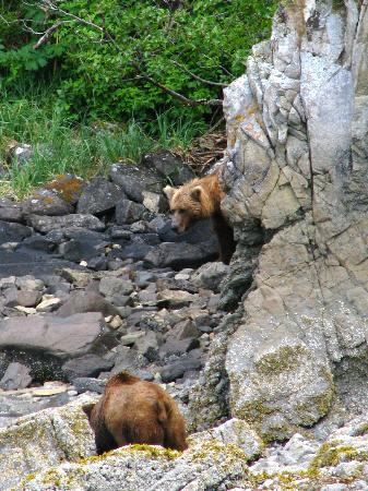 Kingfisher Aviation: Katmai shoreline - this guy came down to confront another bear