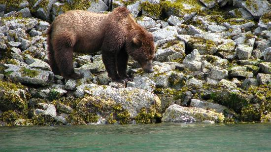 Kingfisher Aviation: Katmai shoreline - bear viewing