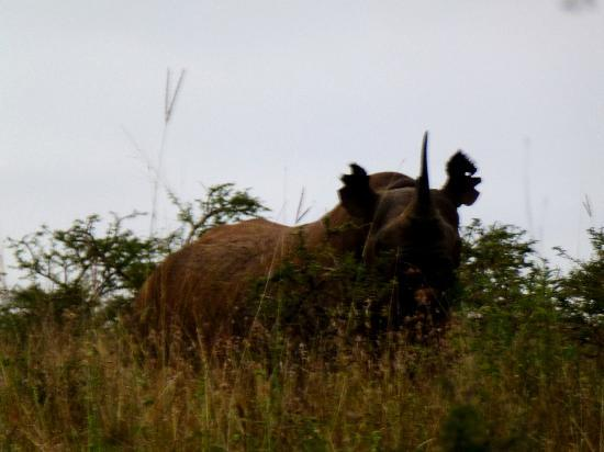 Cruzeiro Safaris : Our First Rhino Sighting