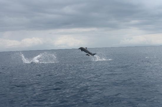 Vista Drake Lodge: delfines manchados.