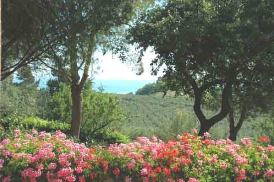 Colle Moro Resort - B&B Villa Maria: Oltre la cornice delle fioriere...... tutto verde