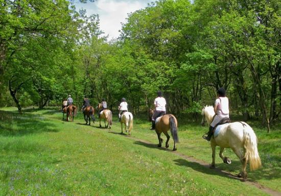Agriturismo Le Dolci Colline: Trekking a cavallo nei dintorni dell'agriturismo