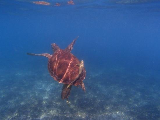 Barcelo Maya Caribe: Akumal beach