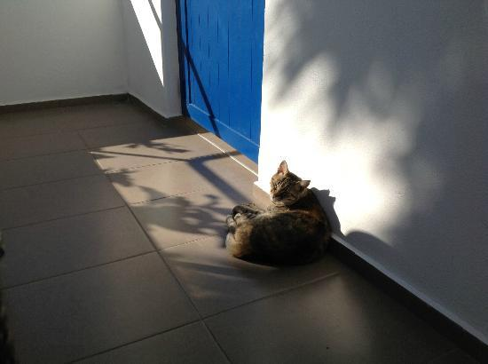 Anna Plakias Apartments: The Cat (on the front terrace)!
