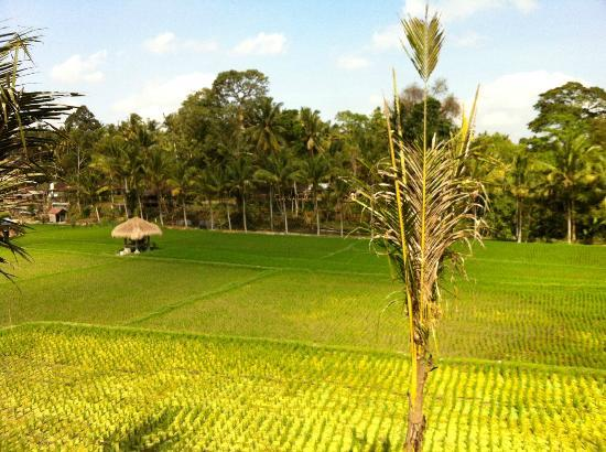 Kenanga Boutique Hotel : amazing view from the bedroom