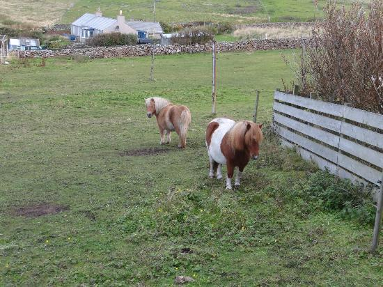 The Spiggie: Ponies!