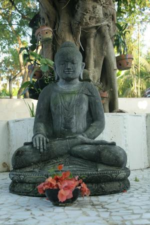 Serenity Eco Guesthouse and Yoga: der buddha am pool