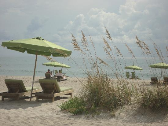 "Marriott's Oceana Palms: These green chairs and umbrellas are for ""rent."""