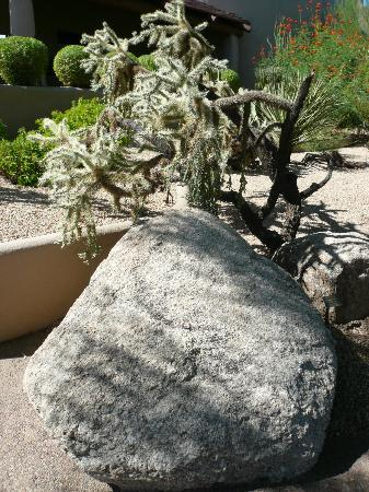 Boulders Resort & Spa, Curio Collection by Hilton: Cactus