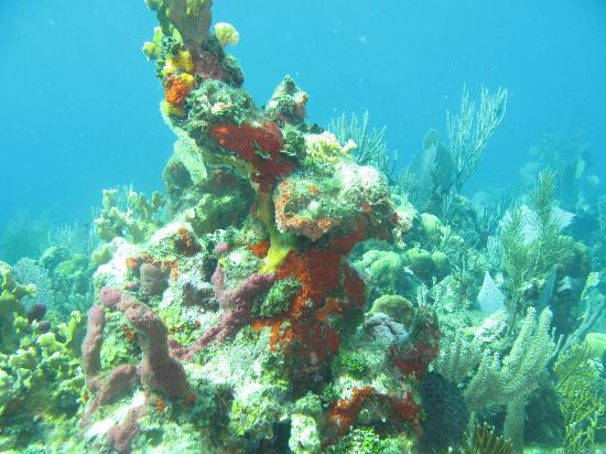 Bay Islands, Honduras: The healthiest coral that we've ever seen!