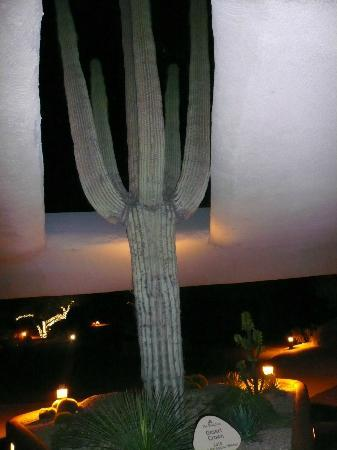 Boulders Resort & Spa, Curio Collection by Hilton: Cactus at main lodge entrance