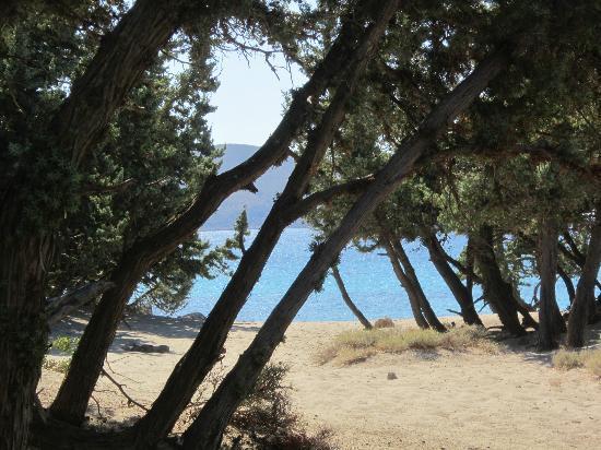Elafonisi Resort by Kalomirakis Family: la spiaggia nel bosco dei cedri