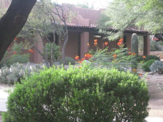 Canyon Ranch in Tucson: outside room 742