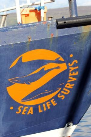 Sea Life Surveys: Sea Life Survey