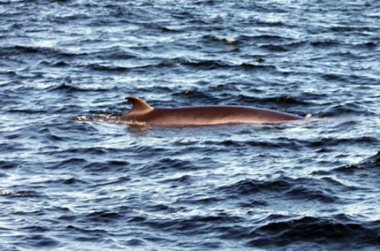 Sea Life Surveys照片