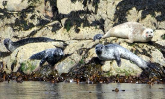 Sea Life Surveys: Seals, Cairns of Coll