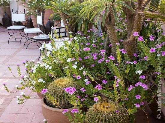 Riad Kniza: The roof terrace