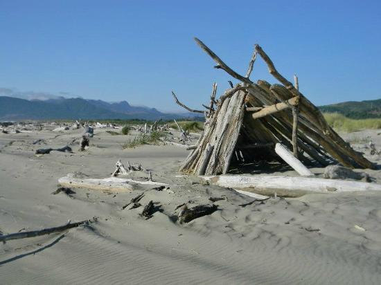 Sea Haven Motel: Driftwood galore in nearby Manhattan Beach State Park