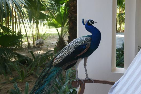 Narendranagar, India: visitors!