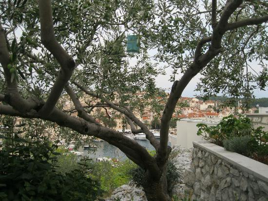 Apartments Olive Tree: view from terrace