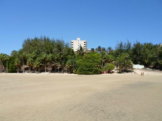 Melia Gorriones: Hotel from beach