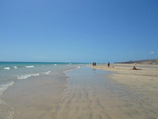 Melia Gorriones Fuerteventura: Beach