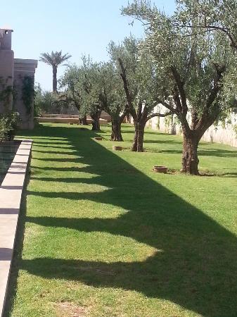 Palais Namaskar: Garden located next to room