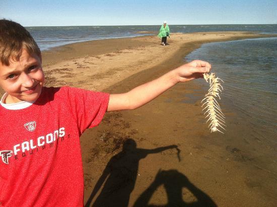 Bay City State Recreation Area: fish bones