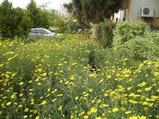 Йесод-Хамаала, Израиль: A Garden in Yesod Hamaala
