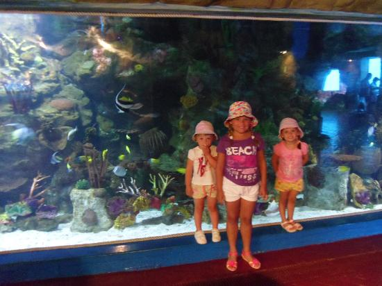 Hotel Marina Resort Benidorm: zoo