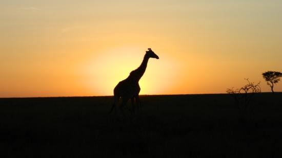 Porini Lion Camp: sun rise on the Mara