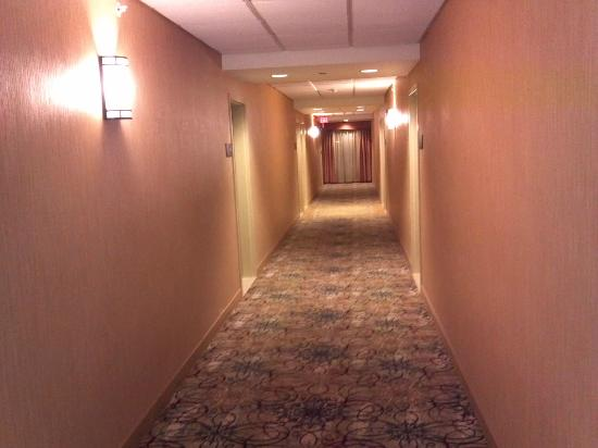 Hampton Inn & Suites St. Louis/South I-55 : hallway