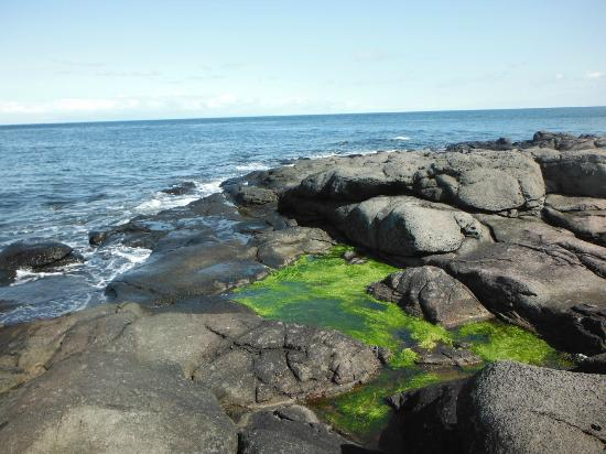 GAEL Tours: An upper shore tidepool, a feature of the Plankton, Periwinkles and Predators tour.