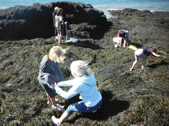 GAEL Tours: Looking for sea anemones in the rockweed!