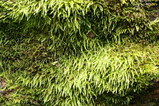 Bucklin Trail: Moss