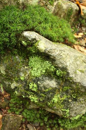Bucklin Trail: Moss on rocks