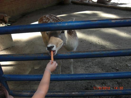 Expanzoo Expansion Centro Educativo Recreacional: bambi