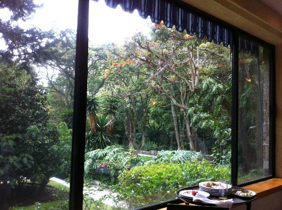 Hotel Spa Ixtapan: A view from the restaurant - hummingbird tree/African Torripan