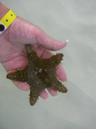 Iberostar Ensenachos: etoile de mer