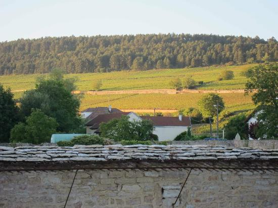 Le Clos du Colombier : view from back yard