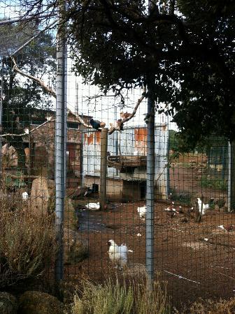 Domaine de Piscia: its a farm!