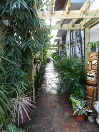 Coqui del Mar Guest House: Walkway to patio/BBQ/hot tub